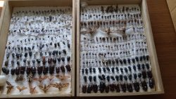 Энтомологическая коллекция.